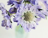 Pastel Purple Flowers, St...