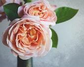 Rose Botanical Print Flor...