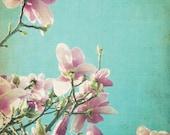 Magnolia Flower Photograp...