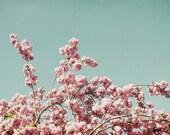 Cherry Blossom Print, Flo...