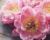 Peony Flower Still Life P...