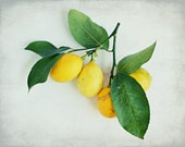 Lemon Photograph, Still L...