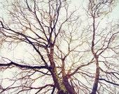 Oak Tree Photograph Wall ...