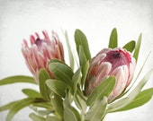 Flower Photography, Flora...