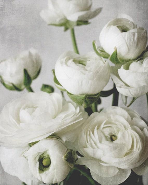 White ranunculus flowers botanical print white gray green etsy image 0 mightylinksfo