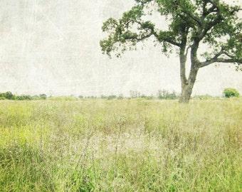"Landscape wall art print rustic green minimal landscape photograph green wall art oak tree in meadow 8x8 20x20  ""Stay a While"""