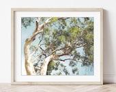 Eucalyptus Tree Print, Tr...