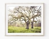 Landscape Photography - O...