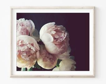 Peony Wall Art - Flower Still Life Photography Dark Floral Botanical Print Pale Pink