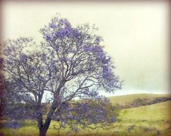 "Landscape Photograph - Purple Lavender - Olive Green Wall Art - Living Room Art - Jacaranda tree - Bedroom Decor ""Memories of Kula"""