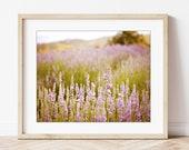 Lavender Field Print, Dre...