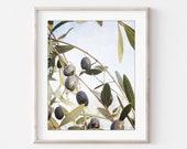 Olive Branch Print, Botan...