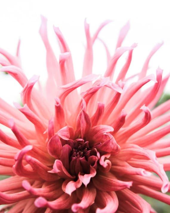 Coral Pink Flower Print Botanical Wall Art Dahlia Flower Etsy