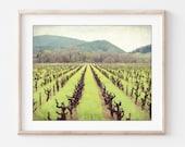 Vineyard Wall Art, Califo...