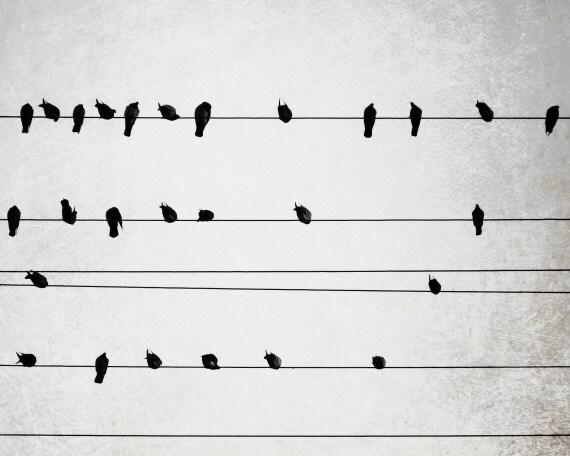 Vögel auf Drähten schwarz-weiß-Fotografie minimale | Etsy