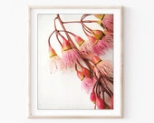 Flower Photography, Eucal...