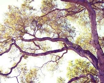 "Nature photography, gold olive green, living room wall art, pale mauve purple print, woodland wall art, oak tree photograph ""Golden Boughs"""