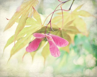 Pastel botanical wall art - maple photograph - pastel bedroom wall art - mint green pink - samaras maple seeds art print - Whirligigs