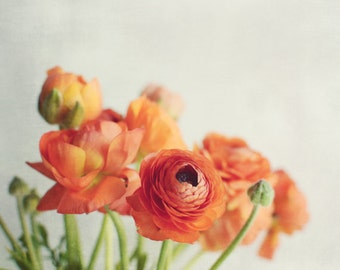 Still Life Photography, Ranunculus Flowers, Orange White Still Life, Flower Photography, Floral Wall Art