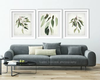 "20% off - Eucalyptus nature wall art botanical prints minimal modern sage green leaves photographs 11x14 ""Eucalyptus Sprig Set of Three"""