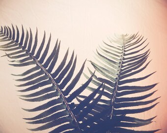 Fern Photograph / Botanical Print / Fine Art Photography / Peachy Fern