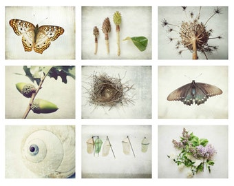 Set of 9 prints, naturalist print set, natural history botanical art, butterfly entomology, modern rustic decor, white nature art - 50% off