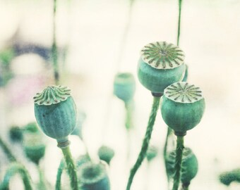 "Botanical print poppy pods photograph beige mint green wall art seed pods art print ""Mint Pods"""