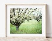 Apple Orchard Photograph,...