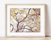 Oak Tree Print, Nature Ph...
