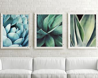 20% off - Fine Art Photography, Blue Green Wall Art, Large Botanical Art, Agave Wall Art, Southwestern Art, Agave print,  Living Room Art