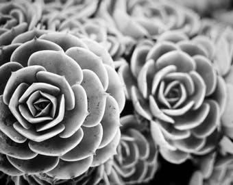 Sedum photograph, gray wall art, succulents, garden plant, black and white sedum art print, living room decor - Blue Garden