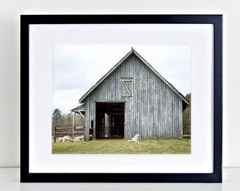 Barn Photography, Print or Canvas Gallery Wrap, Wall Art, Rustic Barn Photo, Grey, Sheep, Country Landscape, Farmhouse Decor - Tuckahoe Barn