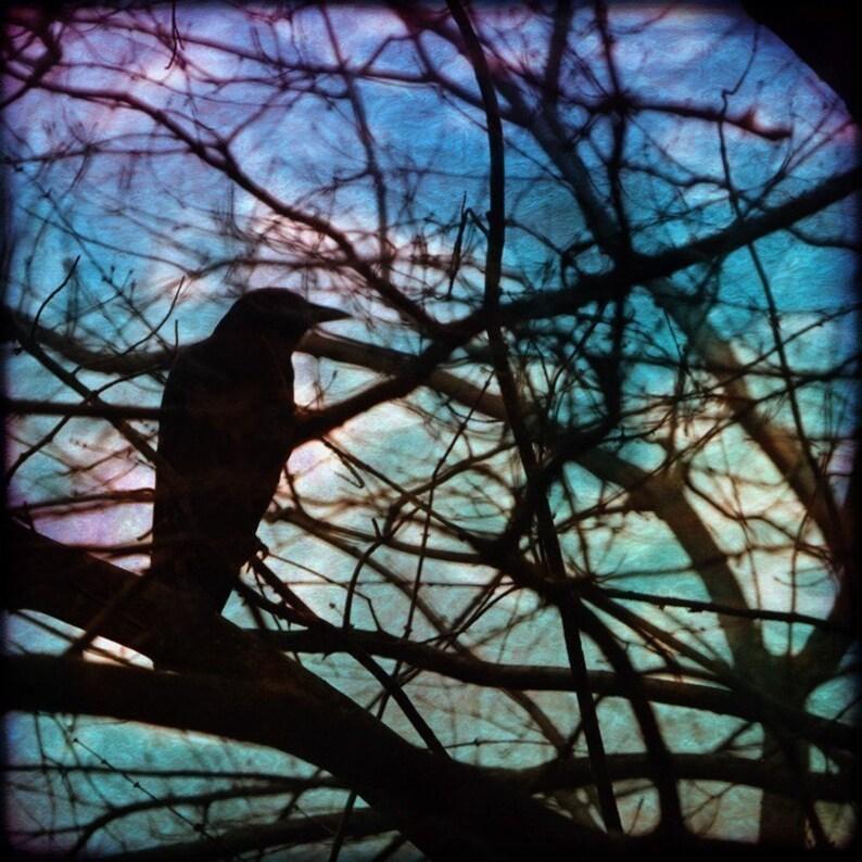 Bird Photograph Canvas or Print Square Crow Decor Raven image 0