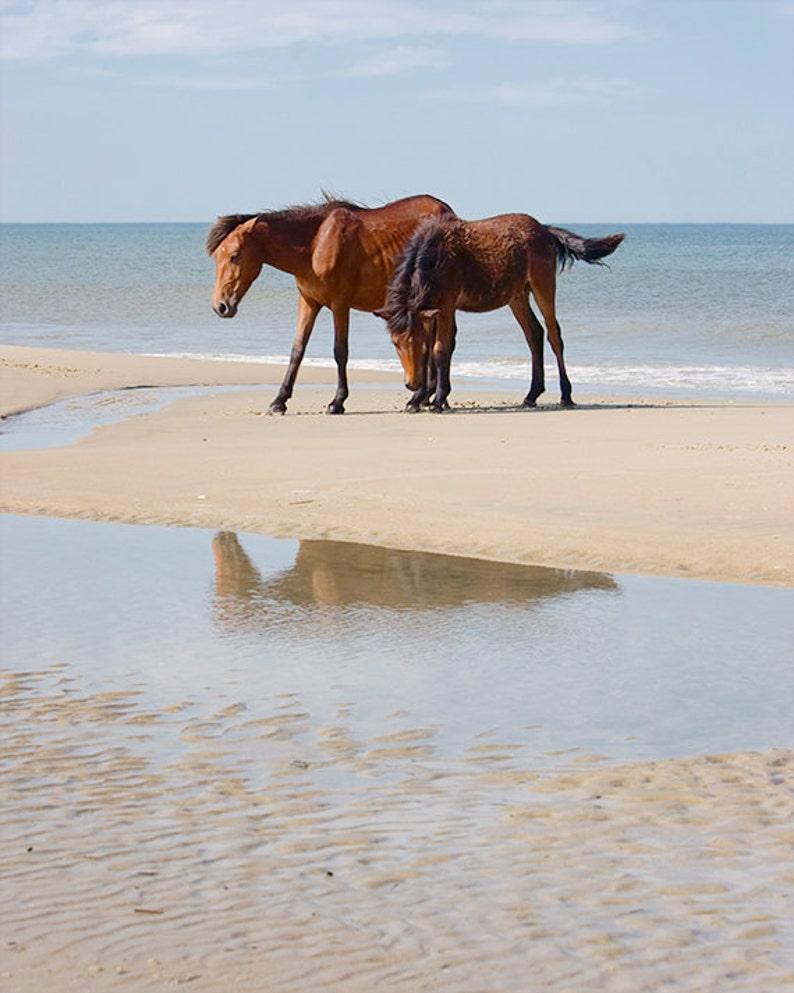 Horse Photography Wild Horses Photo Ocean Beach Decor image 0