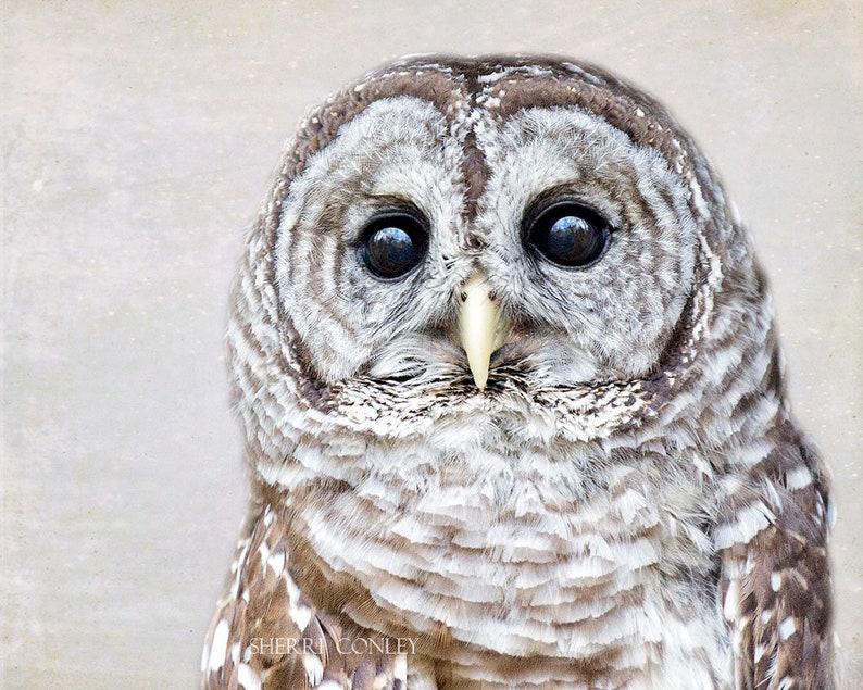 Owl Photograph Bird Art Print or Canvas Gallery Wrap image 0