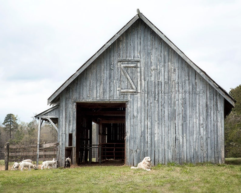 Barn Photography Print or Canvas Gallery Wrap Wall Art image 0