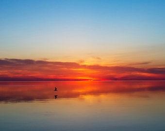Sunset Photography, Landscape Photograph, Sun, Vibrant, Heavenly, Serene, Nautical Art, Beach House Decor - Seagull Sunset