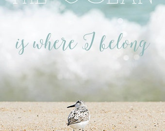 Inspirational Quote, Ocean Photography, Typography, Text, Sandpiper, Nautical Seascape Art, Beach House Decor - The Ocean is Where I Belong