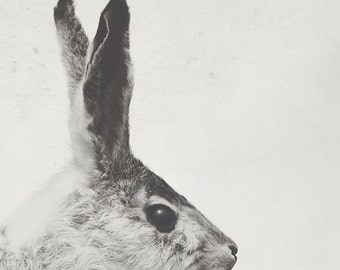 8x12 Bunny, nursery art, rabbit, taxidermy art, fine art photography