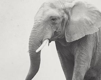8x12 Elephant, animal art, nursery art, african art, home decor, fine art photography