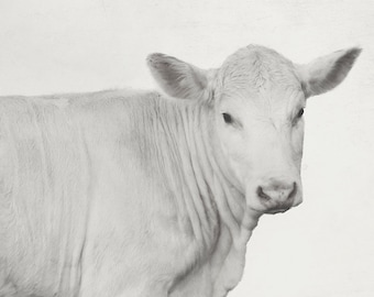 8x12 White Cow, Charolais, nursery art, kitchen art, minimal cow art, animal portrait art