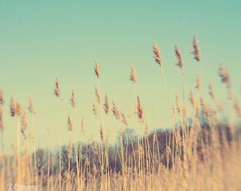 Prairie; rustic decor, fine art photography, pampas grass, gold, green, aqua, wall art cottage decor; by F2images