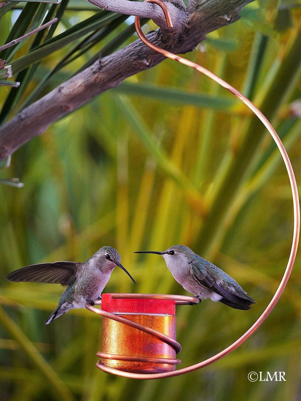 Bee-Proof Drip-Free Copper Hummingbird Feeder II   Etsy