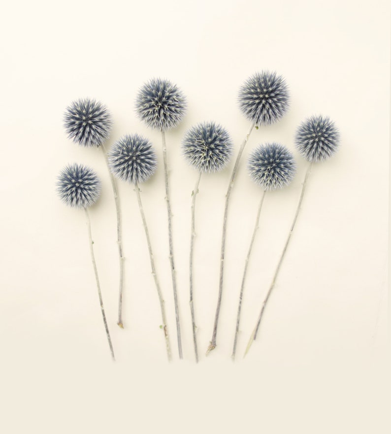 Dried echinops bunch Dried flowers lavender Wedding decor image 0