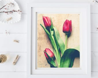 Spring Tulip Photograph - Botanical Wall Art - Flower Photography - Floral Art - Red Green Tan - Modern Rustic Wall Art -Romantic Art