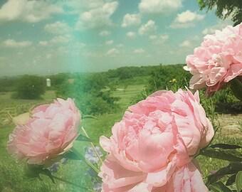 Summer Art Print - Nature Photography - Ohio - Flower Photography - Nature Print - Floral Print - Wall Art - Dreamy Retro Art - Home Decor