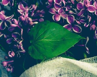 Lilac Photograph - Floral Art Print - Purple Print - Flower Photography - Spring - Macro - Cottage Chic - Farmhouse - Kitchen Art - Petals