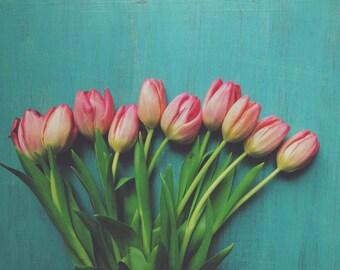 Tulip Photograph - Flower Photograph - Aqua Blue Pink - Floral Art - Spring - Home Decor - Botanical - Still Life - Wall Art - Cottage Decor