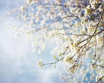 White dreamy flower photography .  nature photography . gift for gardener . for her . pastel blue nursery art . Apple Blossom White