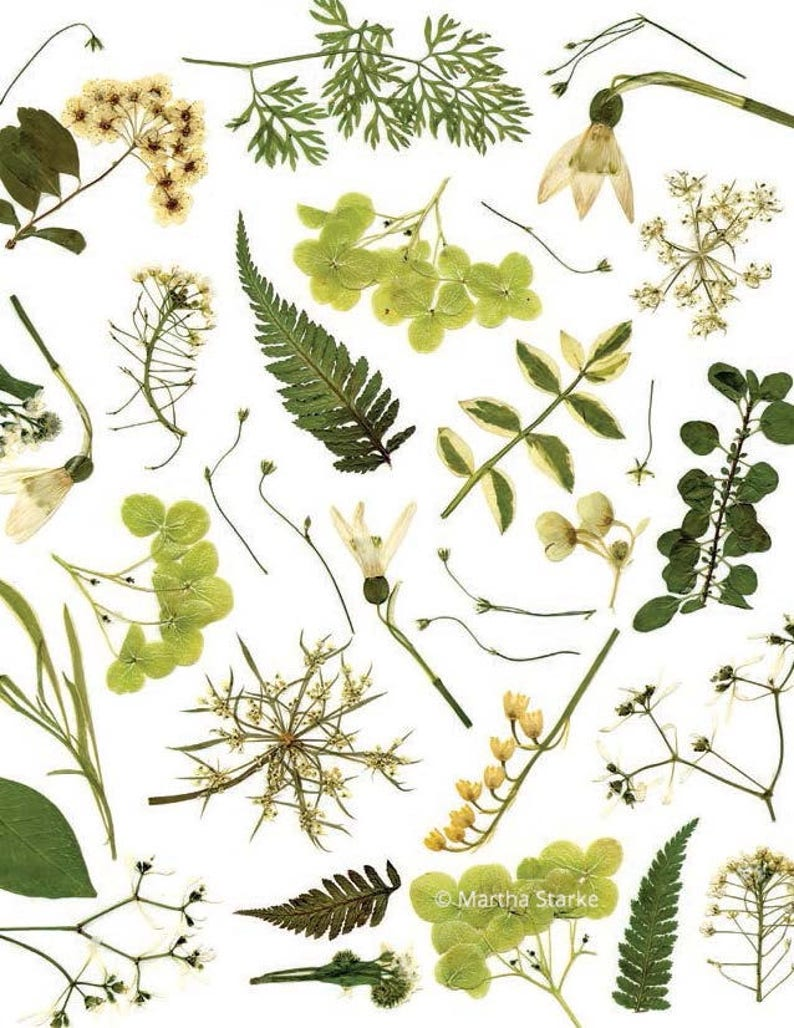 SPRING - Botanical notecard print of flowers, ferns and herbs from garden -  Pressed flower art, meadow, greenery, botany, wildflowers